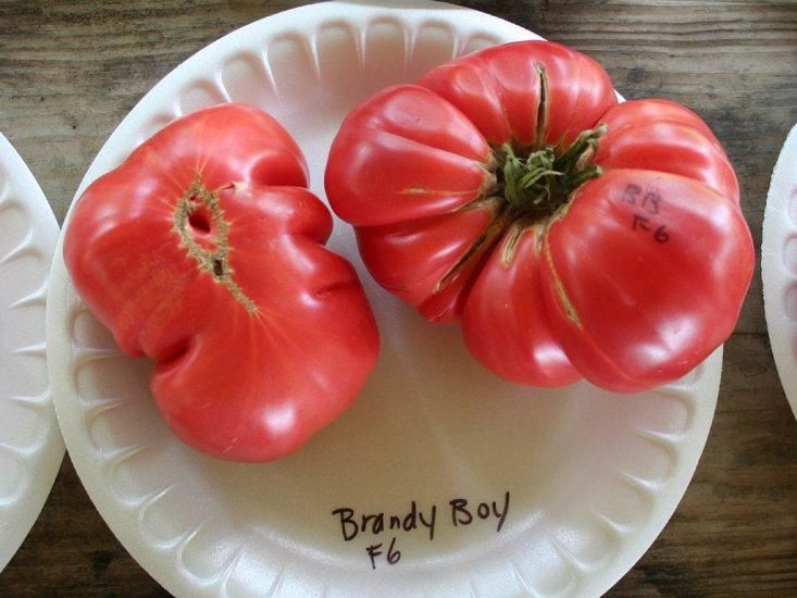 Brandy Boy Tomato