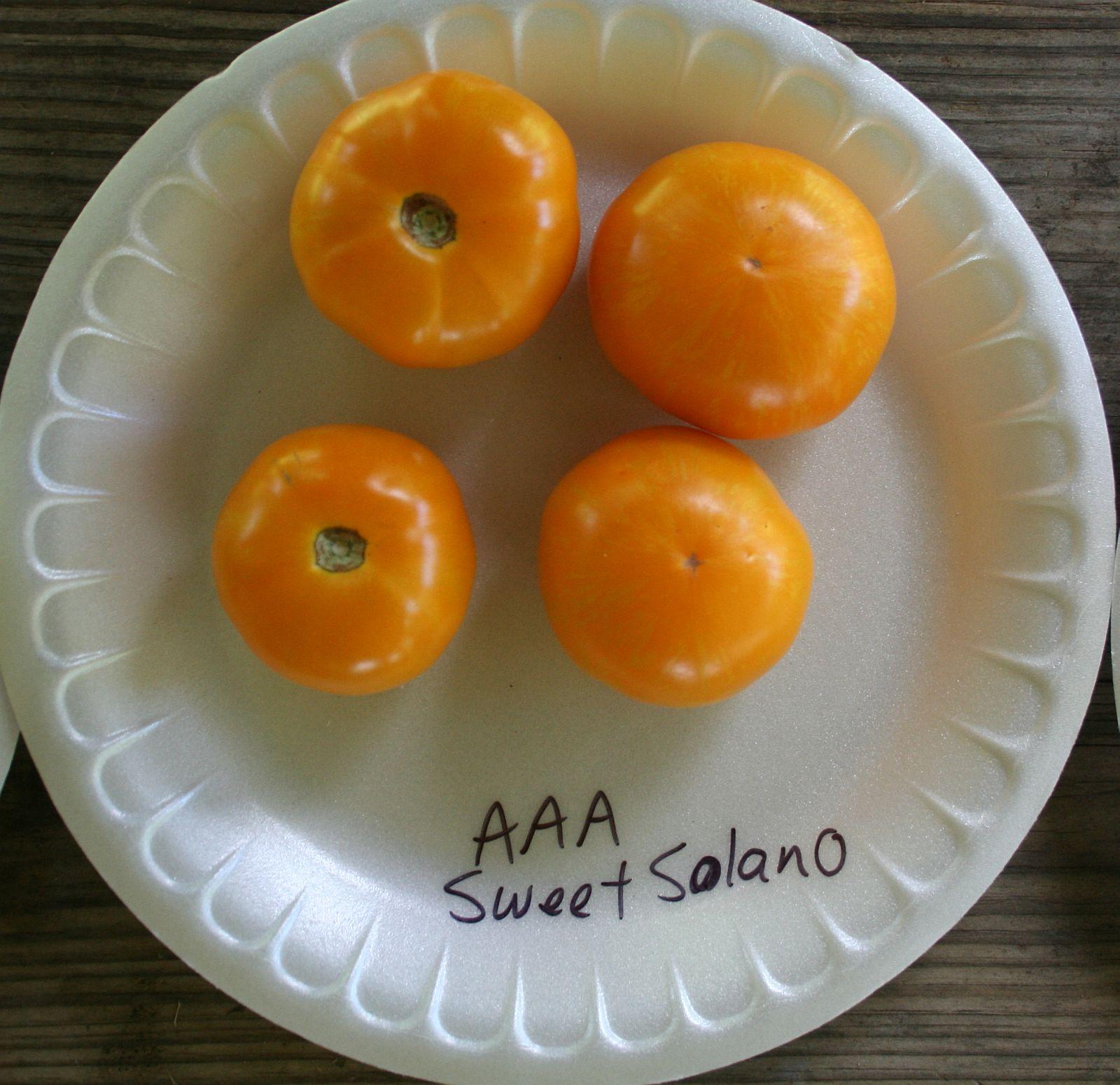 AAA Sweet Solano.jpg