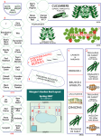 HoustonPlantingChart_2007_rev4.png