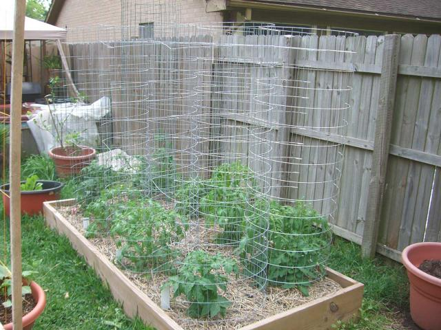 VeggieCages Tomatoville Gardening Forums